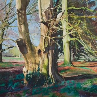 Trees, Lacock Abbey