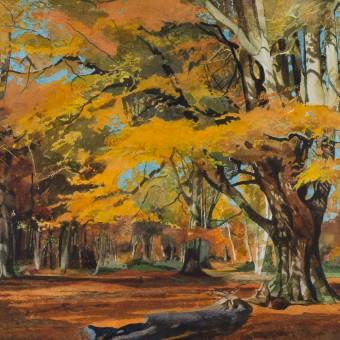 Autumn Beech, Savernacke