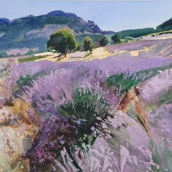 Lavender near St Jaile -Provence