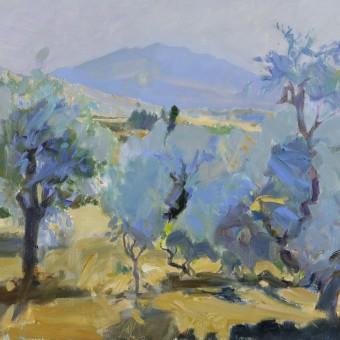 Olive Trees, Portugal